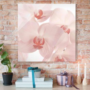 Quadro in vetro - Bright orchid floral wallpaper - Svelte Orchids - Quadrato 1:1