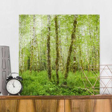 Quadro in vetro - Hoh Rain Forest In Olympic National Park - Quadrato 1:1