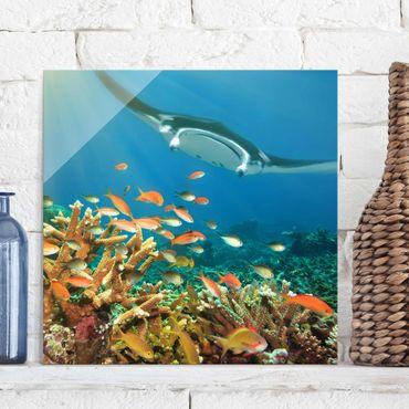 Quadro in vetro - Coral reef - Quadrato 1:1