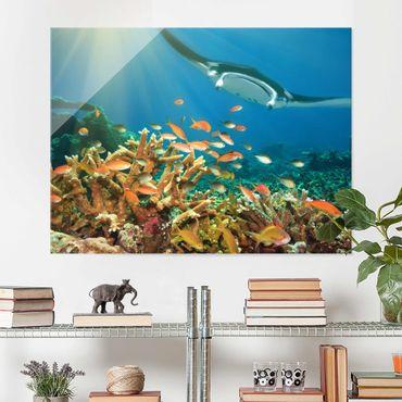 Quadro su vetro - coral reef - Orizzontale 4:3