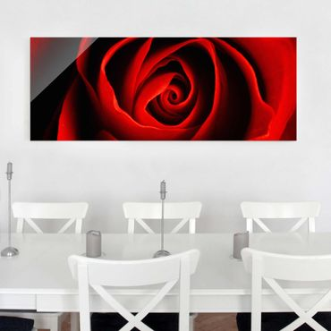 Quadro in vetro - Lovely Rose - Panoramico