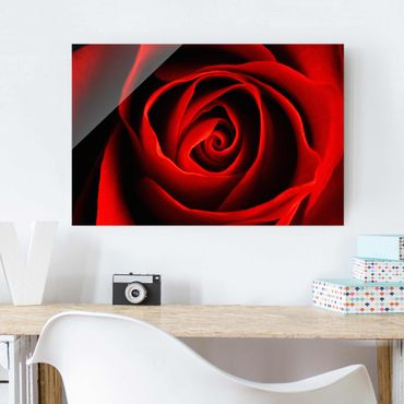 Quadro in vetro - Lovely Rose - Orizzontale 3:2