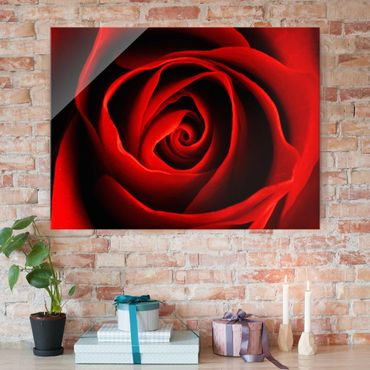 Quadro su vetro - Lovely Rose - Orizzontale 4:3
