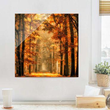 Quadro in vetro - Foresta Incantata in Autunno - Quadrato 1:1