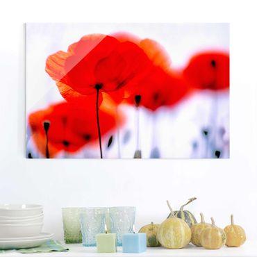 Quadro in vetro - Magic Poppies - Orizzontale 3:2