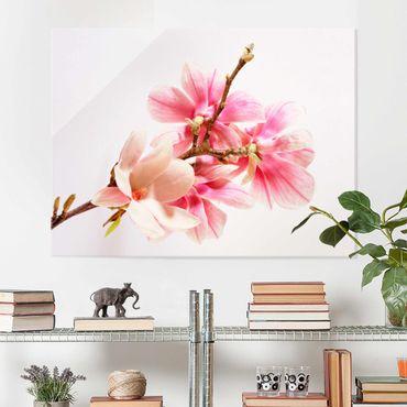 Quadro in vetro - Magnolia Blossoms - Orizzontale 4:3