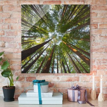 Quadro in vetro - Sequoia tree tops - Quadrato 1:1