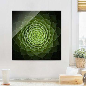 Quadro in vetro - Mandala Succulente - Quadrato 1:1
