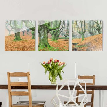 Quadro in vetro - Beech Forest In The Gorbea Natural Park In Spain - 3 parti