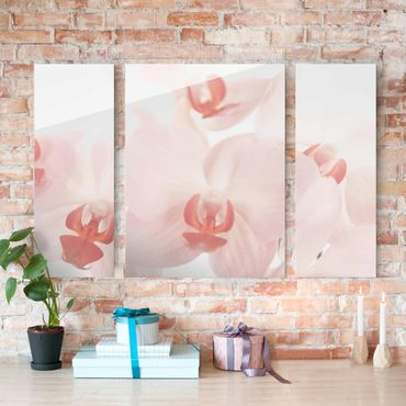 Quadro in vetro - Bright Orchid - Svelte Orchids - 3 parti