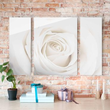 Quadro in vetro - Pretty White Rose - 3 parti