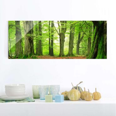 Quadro in vetro - Mighty Beech Trees - Panoramico