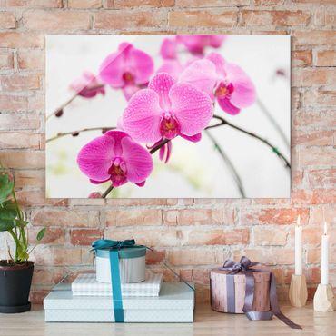 Quadro in vetro - Close up Orchid - Orizzontale 3:2