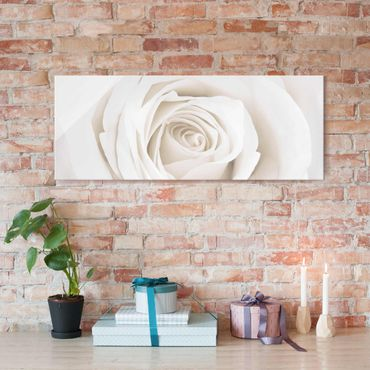 Quadro in vetro - Pretty White Rose - Panoramico