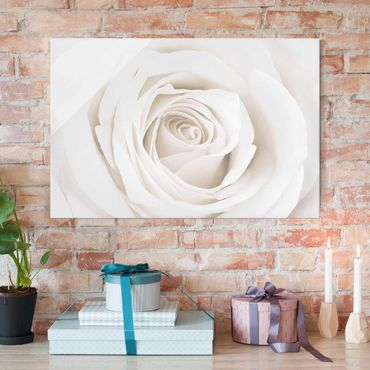 Quadro in vetro - Pretty White Rose - Orizzontale 3:2