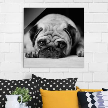 Quadro in vetro - Pug Loves You II - Quadrato 1:1