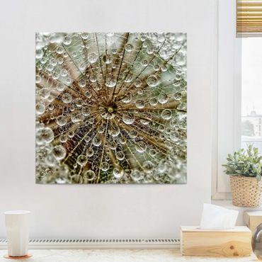 Quadro in vetro - Dente di Leone in Autunno - Quadrato 1:1