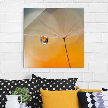 Quadro in vetro - Dente di Leone in Arancione - Quadrato 1:1