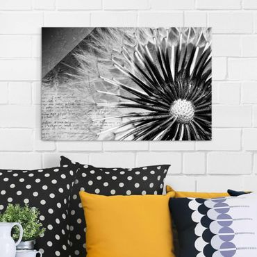 Quadro in vetro - Dandelion Black & White - Orizzontale 3:2