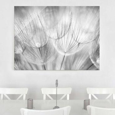 Quadro in vetro - Dandelions macro shot in black and white - Orizzontale 3:2
