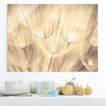 Quadro in vetro - Dandelions close-up in sepia tones homely - Orizzontale 4:3