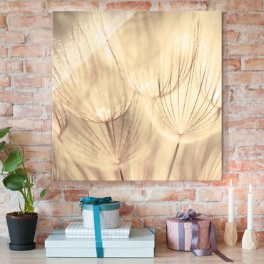 Quadro in vetro - Dandelions close-up in homelike sepia tones - Quadrato 1:1