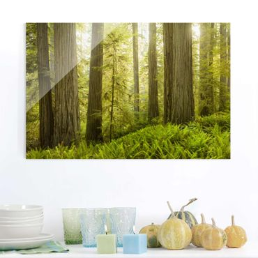 Quadro in vetro - Redwood State Park Forest View - Orizzontale 3:2