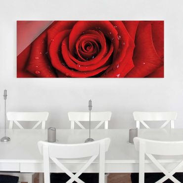 Quadro in vetro - Red rose with water drops - Panoramico