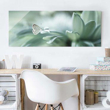 Quadro in vetro - Farfalla E Gocce di rugiada In Pastel Verde - Panoramico