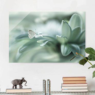 Quadro in vetro - Farfalla E Gocce di rugiada In Pastel Verde - Orizzontale 3:2