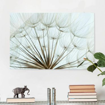 Quadro in vetro - Beautiful dandelion macro shot - Orizzontale 3:2