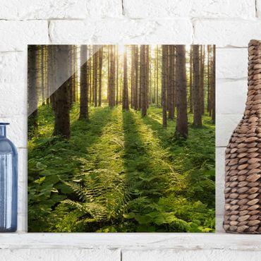 Quadro in vetro - Sun rays in the open forest - Quadrato 1:1