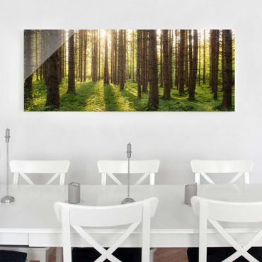 Quadro in vetro - Sunrays in green forest - Panoramico