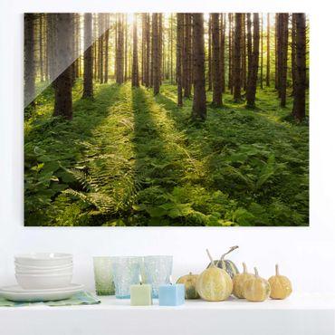 Quadro in vetro - Sunrrays in green forest - Orizzontale 4:3