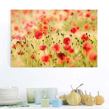 Quadro in vetro - Summer Poppies - Orizzontale 3:2