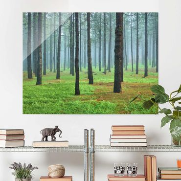 Quadro in vetro - Deep forest with pines on La Palma - Orizzontale 4:3