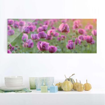 Quadro in vetro - Violet poppy flowers meadow in spring - Panoramico