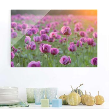 Quadro in vetro - Violet poppy flowers meadow in spring - Orizzontale 3:2