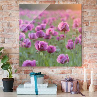 Quadro in vetro - Violet poppy flowers meadow in spring - Quadrato 1:1