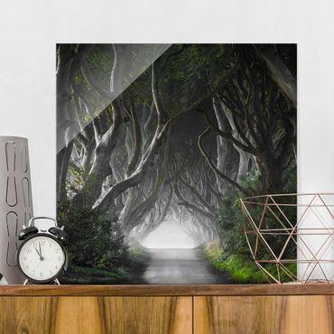 Quadro in vetro - Foresta in Irlanda del Nord - Quadrato 1:1