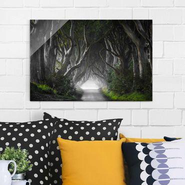Quadro in vetro - Foresta in Irlanda del Nord - Orizzontale 3:2