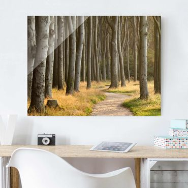 Quadro in vetro - Forest road in Northern Germany - Orizzontale 4:3