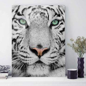 Quadro in vetro - White Tiger - Verticale 3:4