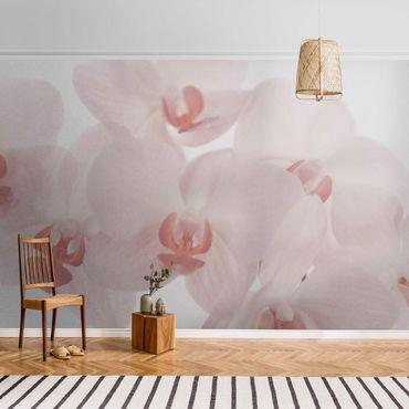 Carta da parati metallizzata - Carta da parati floreale con orchidea - Svelte Orchids