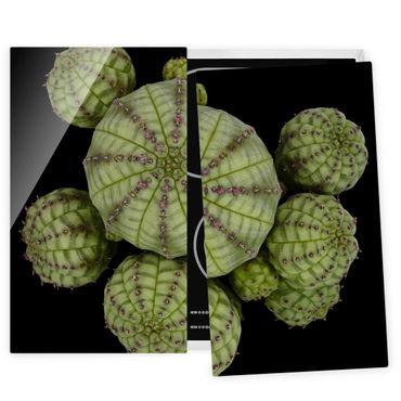 Coprifornelli in vetro - Euphorbia - Spurge Ricci