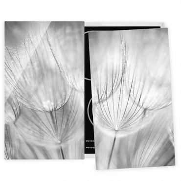 Coprifornelli in vetro - Dandelions Macro Shot In Black And White