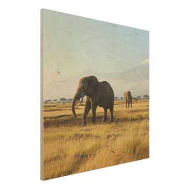 Quadro in legno - Elephants in front of the Kilimanjaro in Kenya - Quadrato 1:1