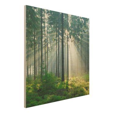 Quadro in legno - Enlightened Forest - Quadrato 1:1