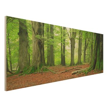 Quadro in legno - Mighty Beech Trees - Panoramico