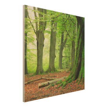 Quadro in legno - Mighty Beech Trees - Quadrato 1:1